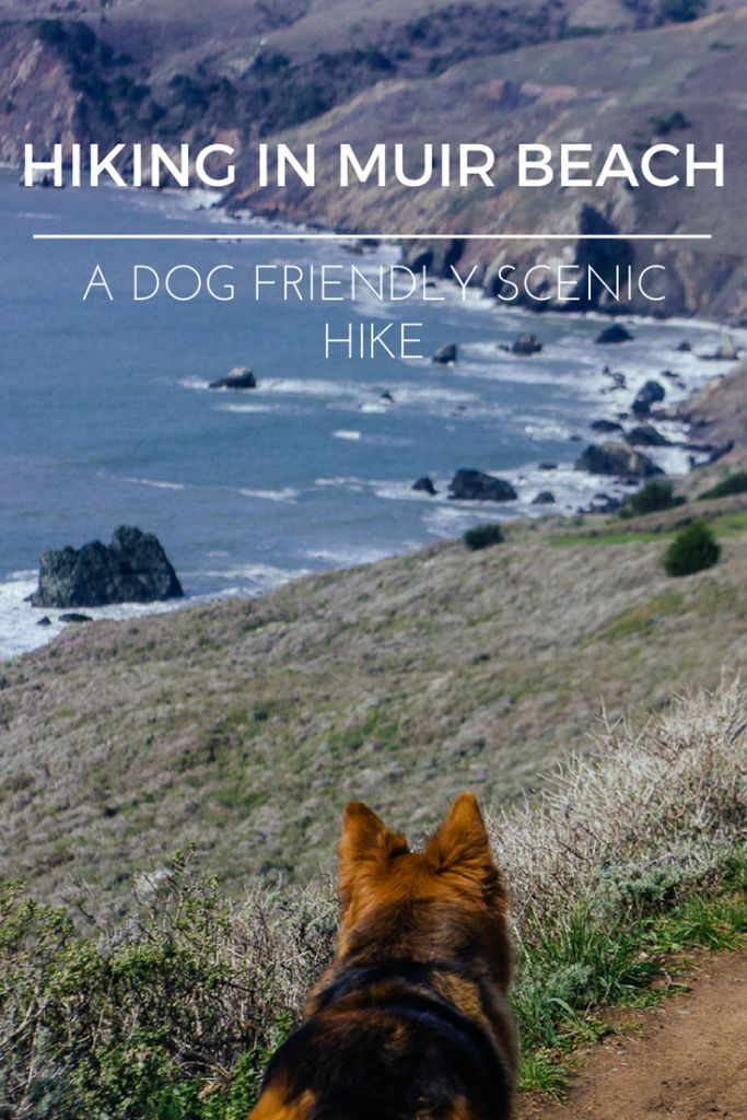 Dogs hiking Muir beach lookout Bay area GGNRA California Marin. Dog Friendly Travel. Travel with dogs