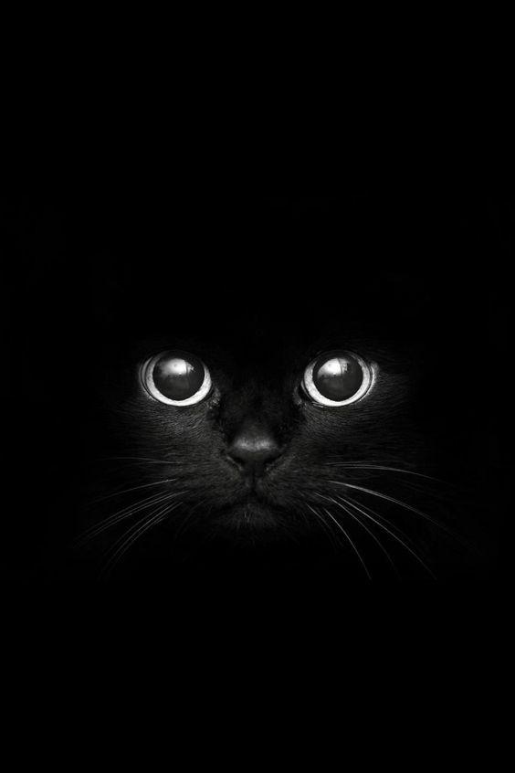 Сегодня у меня кошачье настроение))