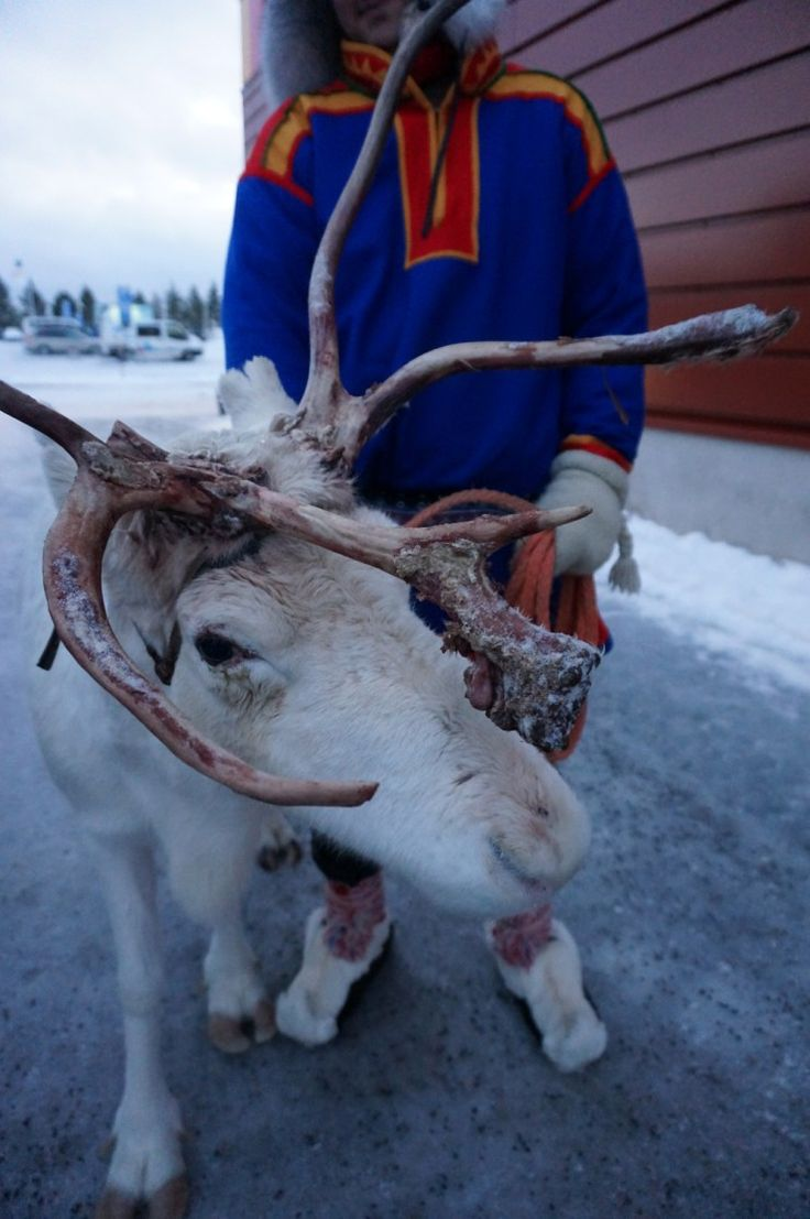 Thinking of taking the kids to Lapland? Have a peek into Santa's Lapland Day 1 – Journey to Lapland and Arrival At Santa's Hotel Tunturi, Saariselka