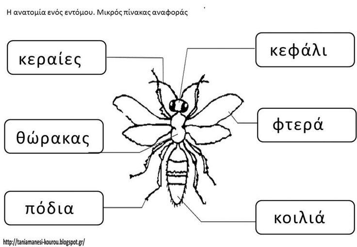 63 best ESL Science images on Pinterest | Biowissenschaft ...