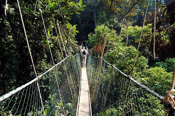 Situé en plein cœur de la Malaisie péninsulaire, ou encore péninsule de Malacca, se trouve le parc du Taman Negara qui signifie parc national en malais.