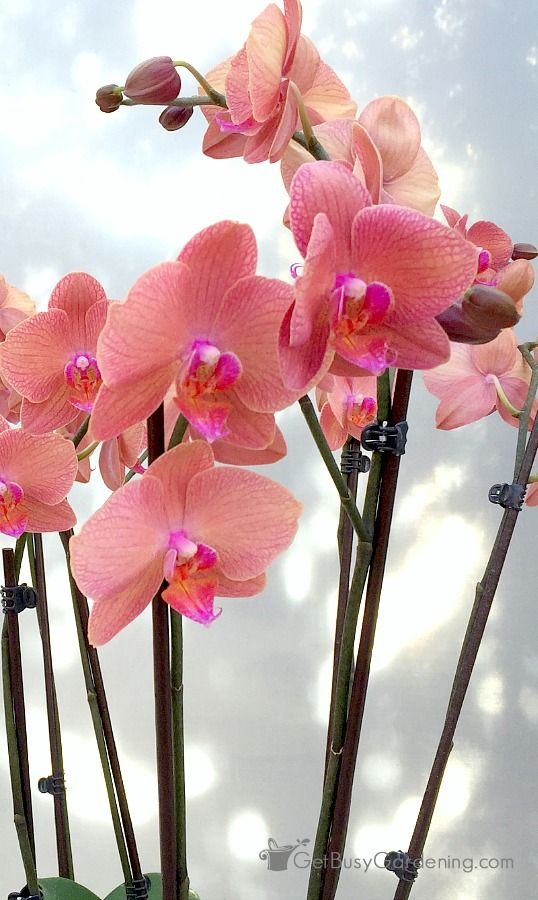 The 182 Best Gardening Orchids Images On Pinterest Indoor House