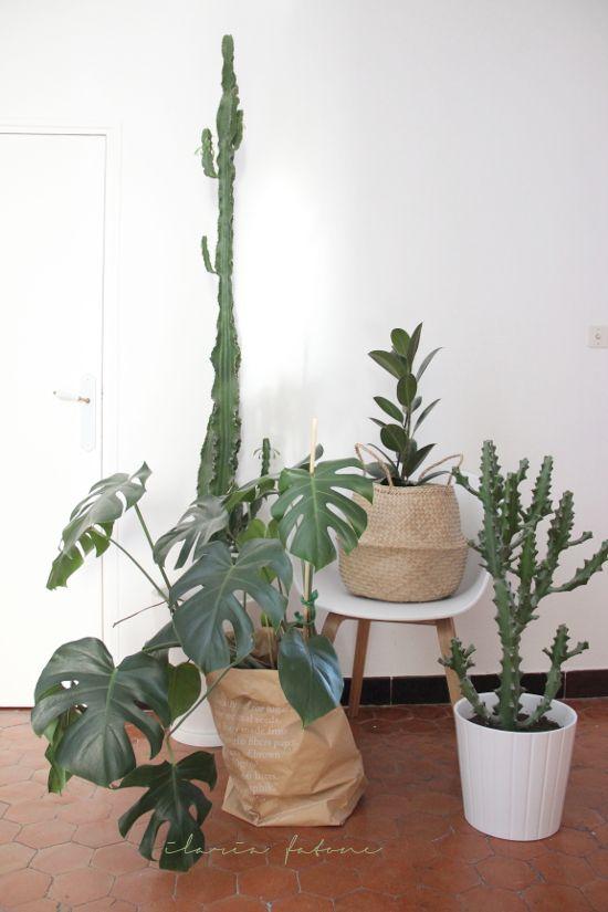 Urban Jungle Bloggers: My Plant Gang by @ilariafatone