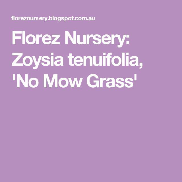 Florez Nursery: Zoysia tenuifolia, 'No Mow Grass'