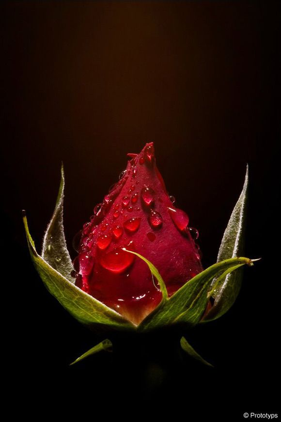 """""""Nobody hears the cry of the flower when the Bud is revealed"""".....ZEN...."""