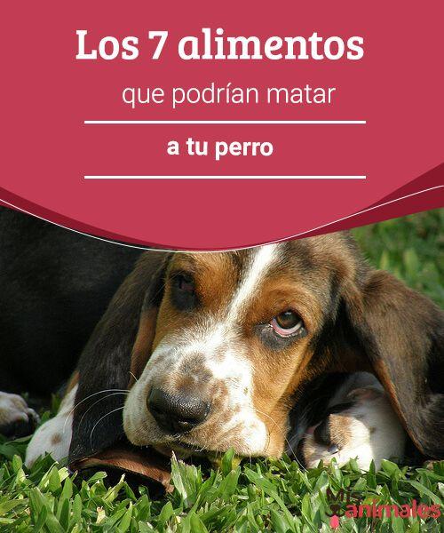 Los 7 alimentos que podrían matar a tu perro - Mis animales  Si tienes la costumbre de que tu perro ingiera comidas similares a las tuyas, te contamos que hay 7 alimentos que pueden matar a tu perro. Veremos cuáles son.