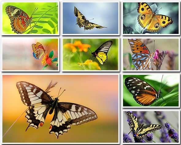 Бабочки - фото высокого разрешения (FullHD+)