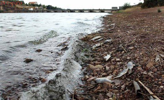 La falta de caudal ecológico provoca la mortandad de peces en el río Bullaque