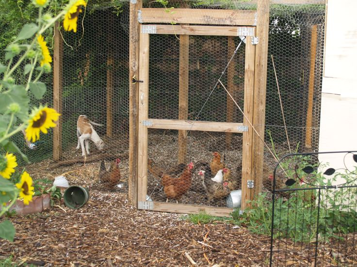 How To Build A Chicken Wire Fence With Gate Google
