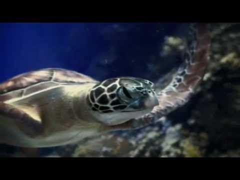 TurtleTrek @ SeaWorld Resort Orlando