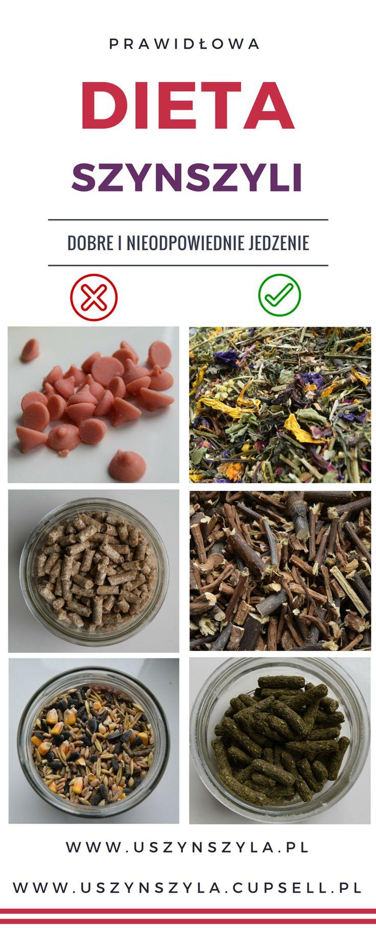 Co mogą, a czego nie powinny jeść szynszyle? #szynszyle #szynszyla #dieta #diy #inspirations #chinchilla #chinchillas #food