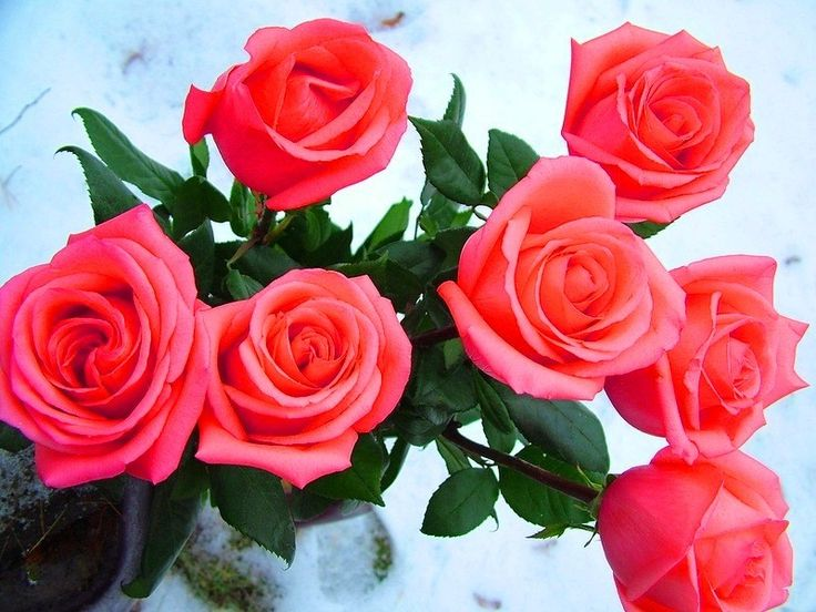 Открытка розы для одноклассники, открытки всего доброго