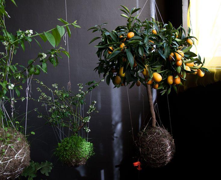 The String  Indoor Gardens: Idea, String Gardens, Vans, Minis Gardens, Plants, Gardening Suspended, Fruit Trees, Suspenders Stringgarden, Hanging Gardens