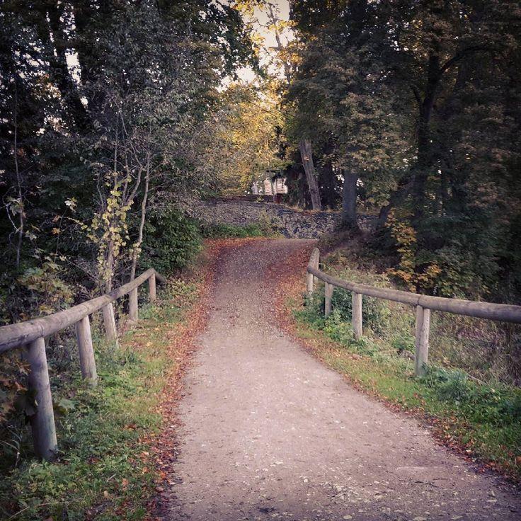 «Дорога в осень / Road to autumn #autumn #park #road #october #octoberrust #nature #природа #осень #листья #октябрь #парк #здесьходилпушкин #дорога #мост…»