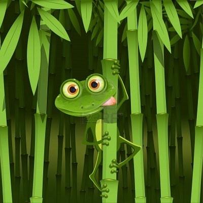 rana en bambú    selva