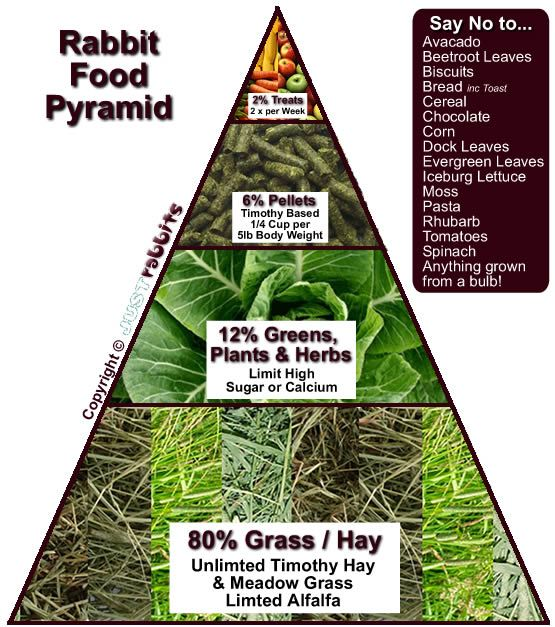 The rabbit diet pyramid - it's soooo simples! Have a look at the safe food list and of more importantly of course the UNSAFE food list... http://www.justrabbits.com/rabbits-diet.html#greens