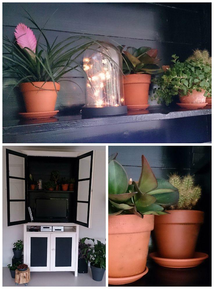 TV kast, een oude servieskast zwart geverfd aan de binnenzijde, daardoor valt de tv niet meer op. En groene plantjes erin en omheen gezet. Deurtjes kunnen dicht, woestijnplanten kunnen dat aan. Boomstronkjes uit de tuin met wieltjes van de bouwmarkt eronder. Deze kan zeker bij de #intratuingroeneoase