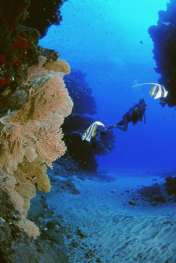 Tips for best #diving and undersea walk on #Mauritius Island: http://www.thewondermap.com/mauritius-island/