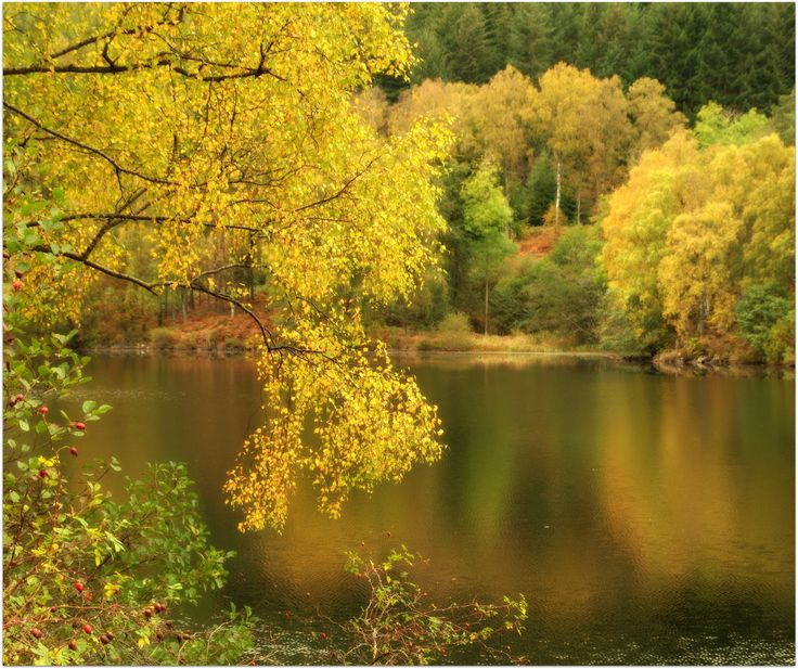 Autumn tones in Perthshire by eric niven on 500px