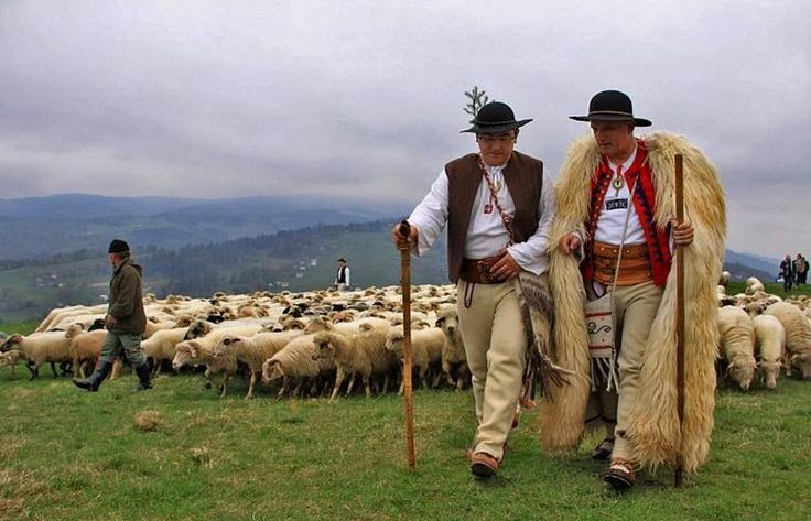 Shepards in Poland living a good life full of traditions and beauty in nature. The same way like in Romania.