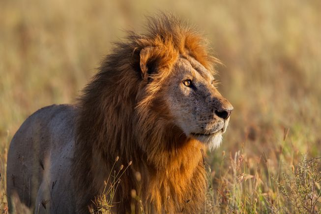 How to help wild lions like Cecil | MNN - Mother Nature Network