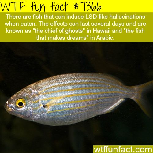 This fish induces hallucinations - WTF fun facts