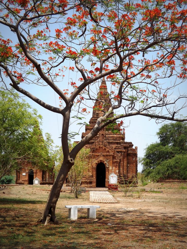 An ancient pagoda, or temple, glimpsed through the orange blossom of a lone tree in dusty Bagan, Myanmar. (2014)