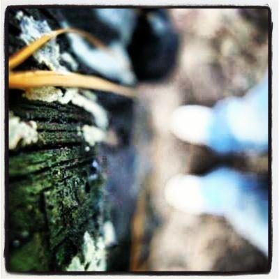 Blurred lines. Tree. Moss. Love.