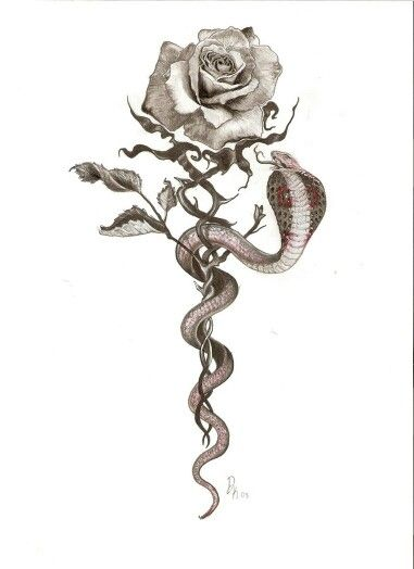 Snake rose tattoo... Different snake tho. Maybe a coral or mamba.
