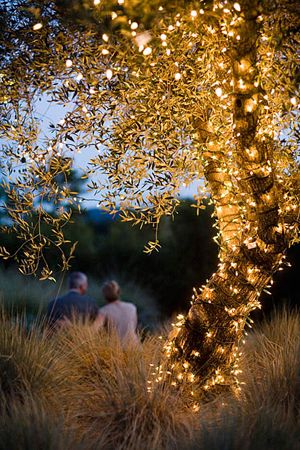 i'm getting married outside by a lake. Idea of how to decorate my wedding tree which we will be married under. #DBBridalStyle.