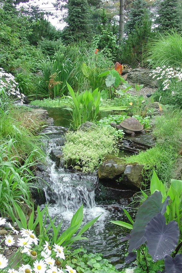 water garden and flowing stream is really calming to have