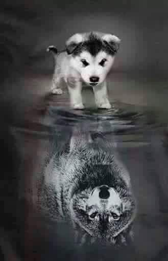 """Beautiful Wolves. """"Remember - you are bigger and stronger than your body gives you credit for."""" - Fa8talwarning"""