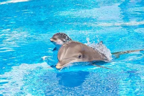 Las tMinute option for the 10-day dolphin program. Take action now, if you are interested! http://curiosumhealing.com/en/LastMin-10-day-dolphin