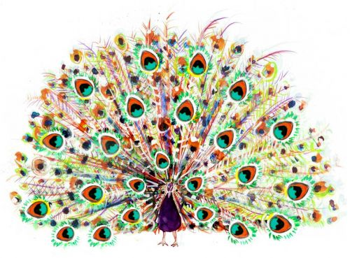 peacock: Paintings Art, Peacock Art, Oil Paintings, Thumb Prints, Color, Pretty Peacock, Things Peacock, Flowers Design, Drawing