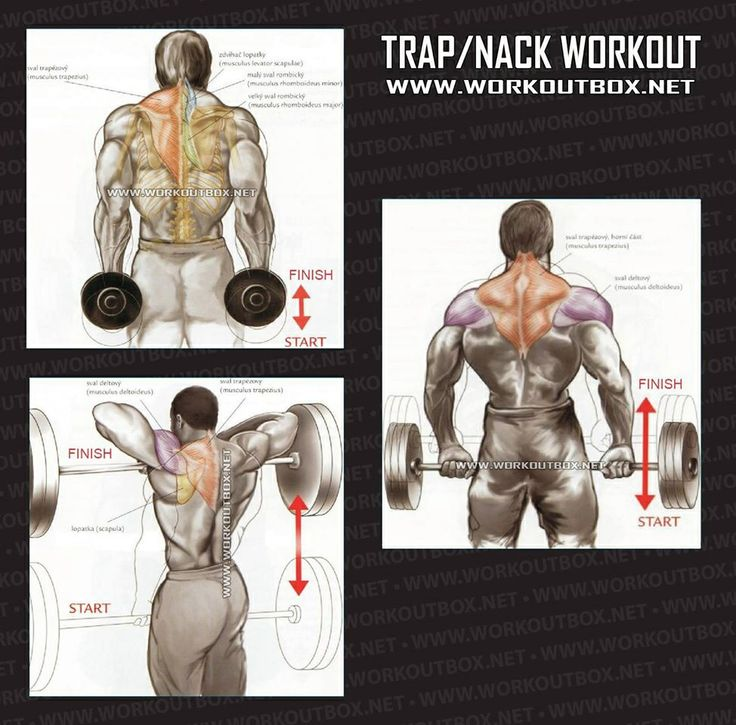 Trap Nack Workout..