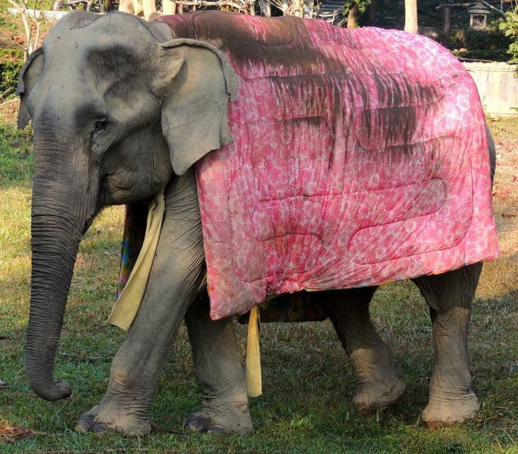 38 best Elephant Rescue Adventure in Thailand images on Pinterest ...