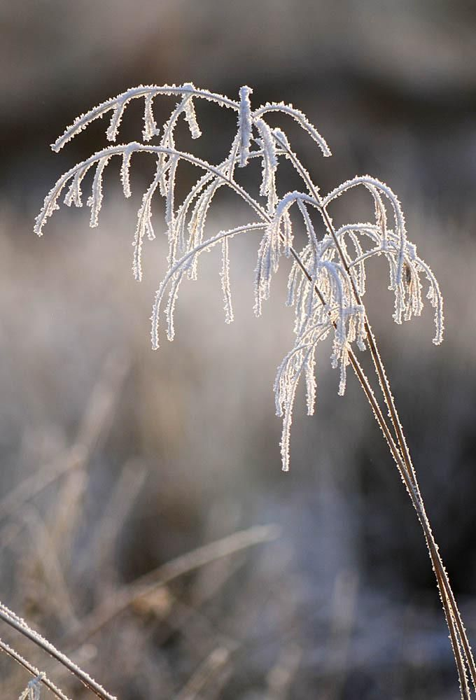 Winter Grasses - Pixdaus