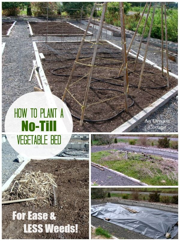 Perfect Planting A Garden Bed The No Till Way U003d Fewer Weeds
