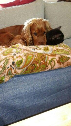 Best friends Cookie & Patouffe