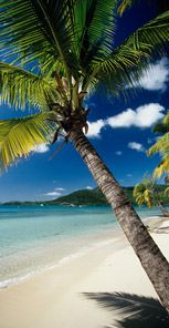 Resort : Buccaneer's Creek (Martinique), HOME - Family resort and all inclusive vacations with Club Med