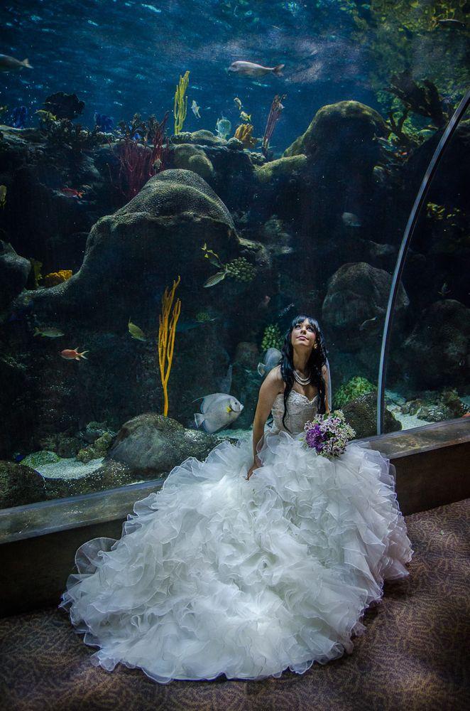 142 Best Images About Florida Aquarium Weddings On