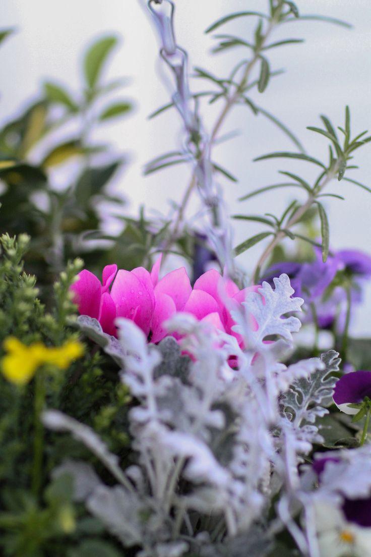 Hanging Flower Baskets Winter : Best winter hanging baskets ideas on