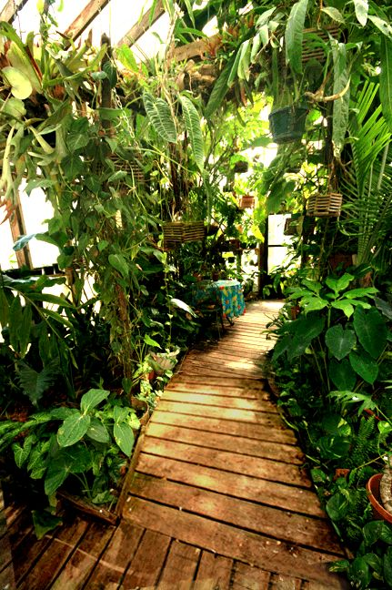 10 Best Images About Plant Atriums For House Add On On