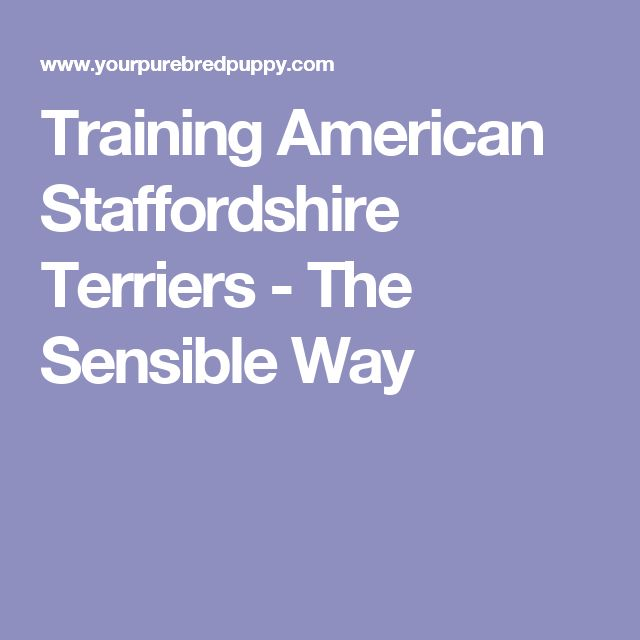Training American Staffordshire Terriers - The Sensible Way