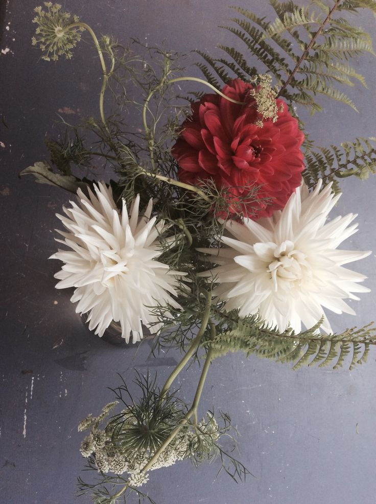 Eccentric shapes and movement with Dahlias