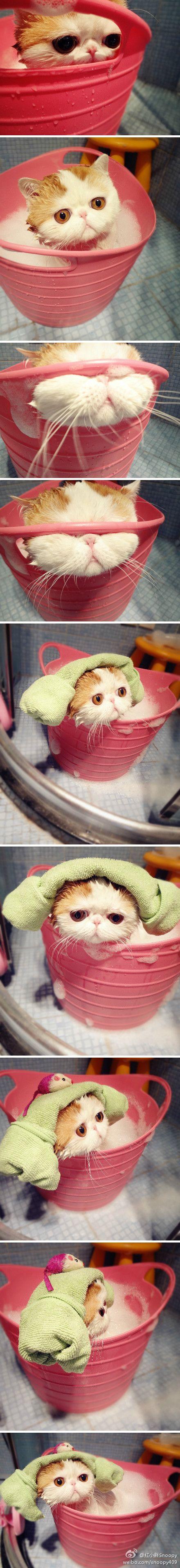 Hora del baño! Omg esos ojitos! ♥  =D