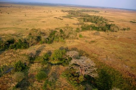 A vast stretch of African savanna in Mozambique's iconic Gorongosa National Park.  Photo by Jean-Paul Vermeulen.