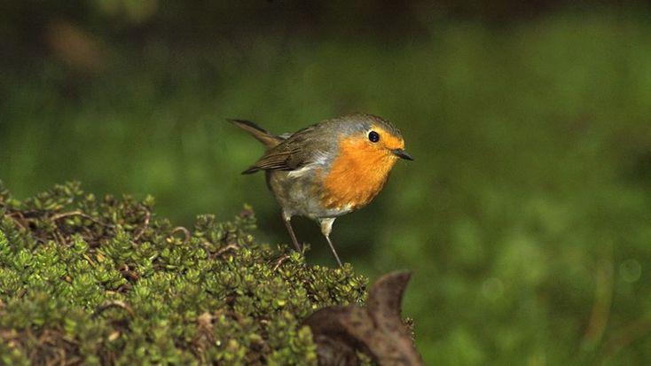 Herken jij de vogels in je tuin? (Foto: Free Nature Images/Piet Munsterman)