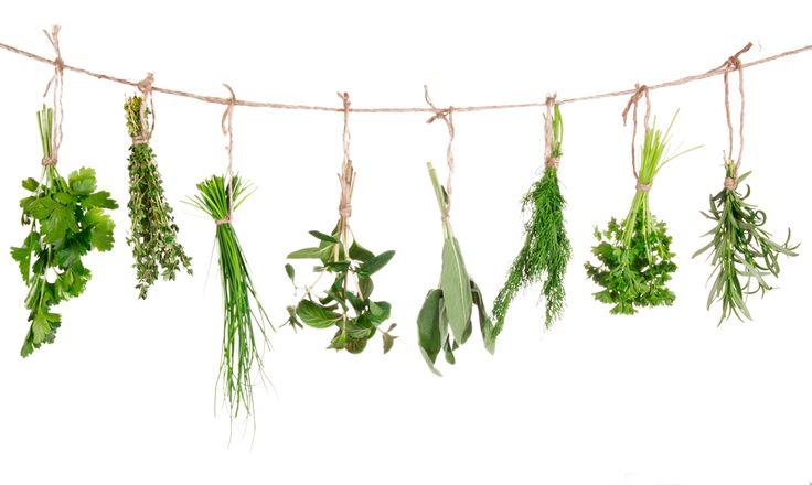 Sušenie a skladovanie liečivých rastlín