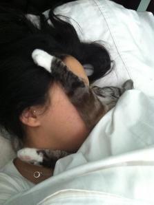 snuggle..: I Love Cats, Snuggles Close, My Life, Wake Up, Sweet Love, Snuggles Time, Cat Sleeping, Kitty, Sweet Dreams